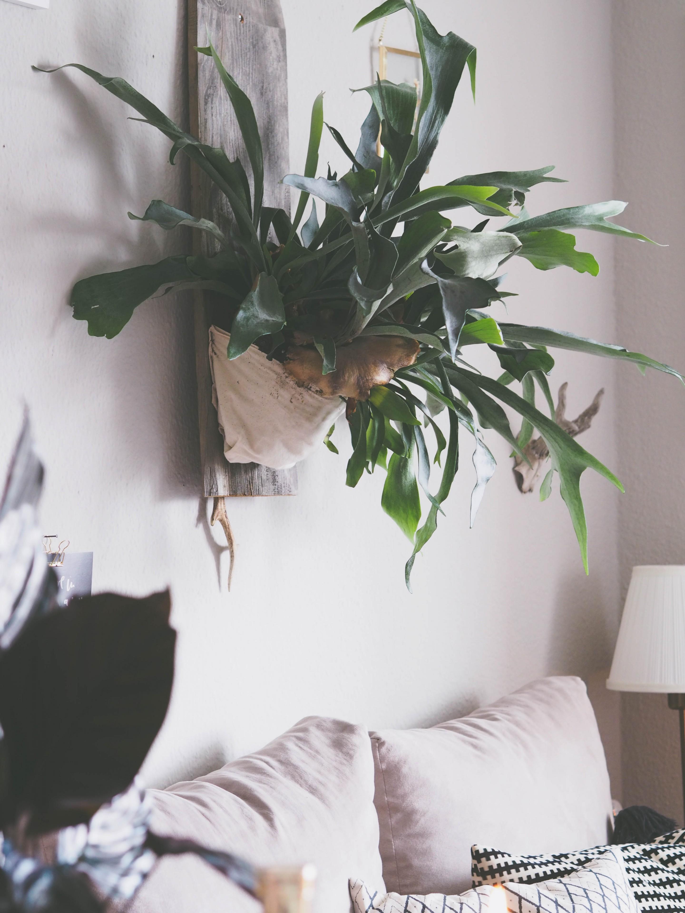 Boho_Interior_Update-1