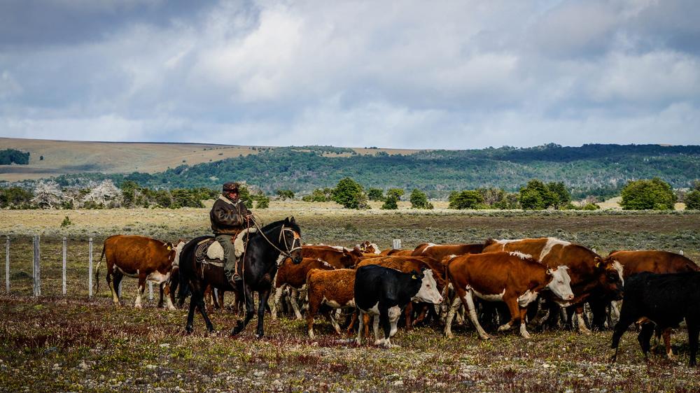 patagonien-reisebericht-vegan-travel-guide-cowboy