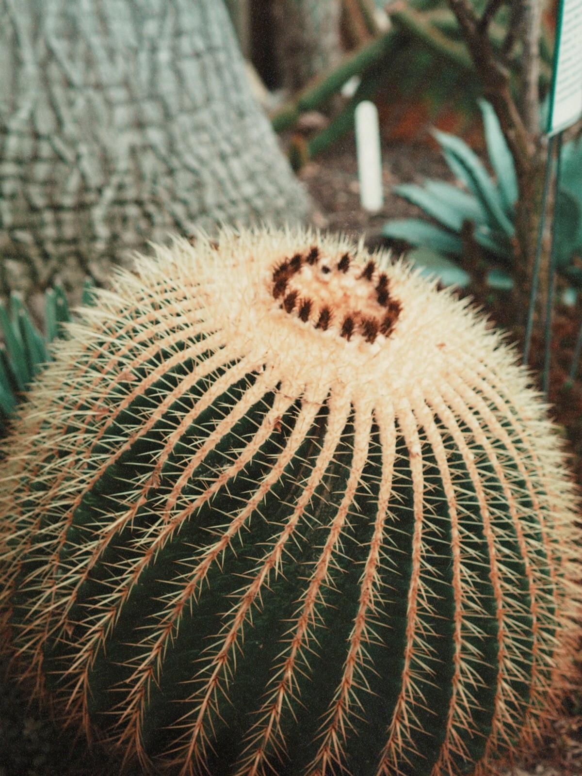 botanical_plant_cactus_outfit_10