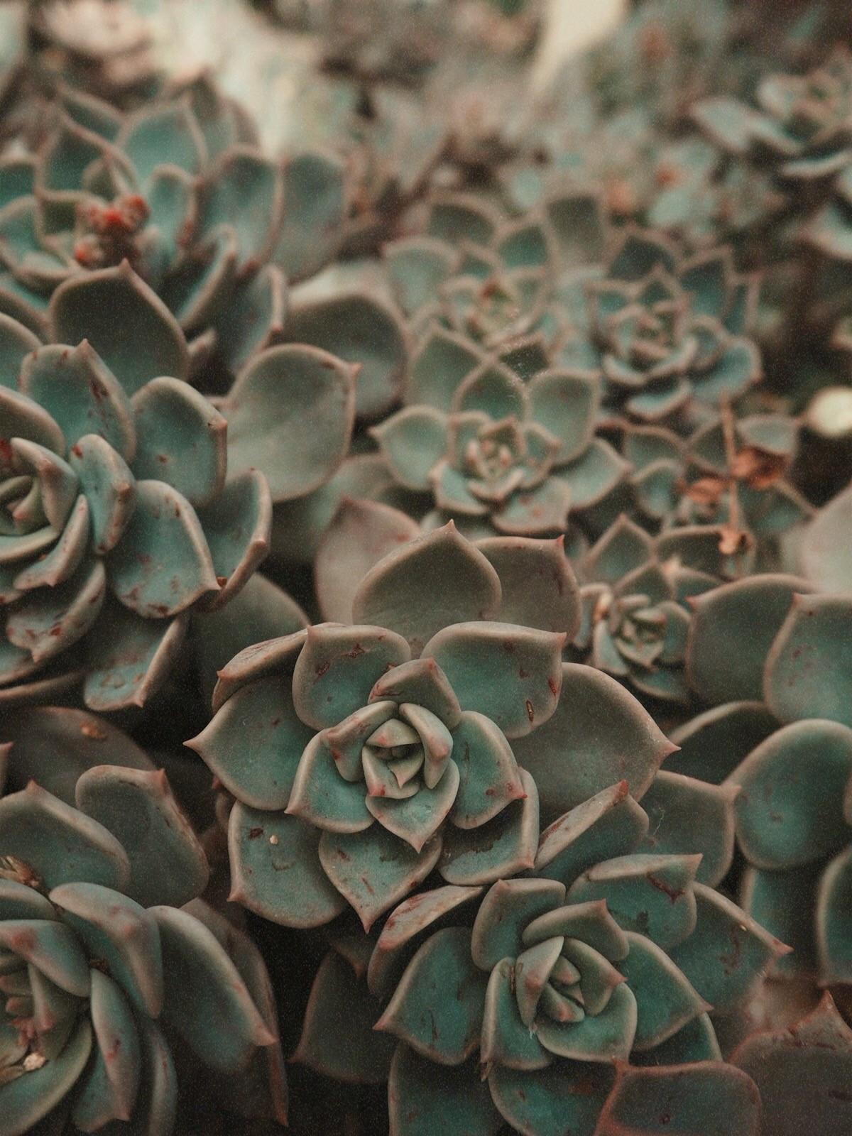 botanical_plant_cactus_outfit_12