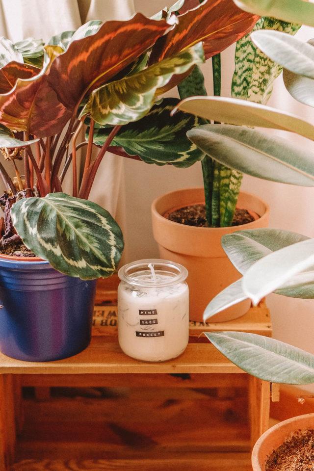 Duftkerze Sojawachs und ätherische Öle