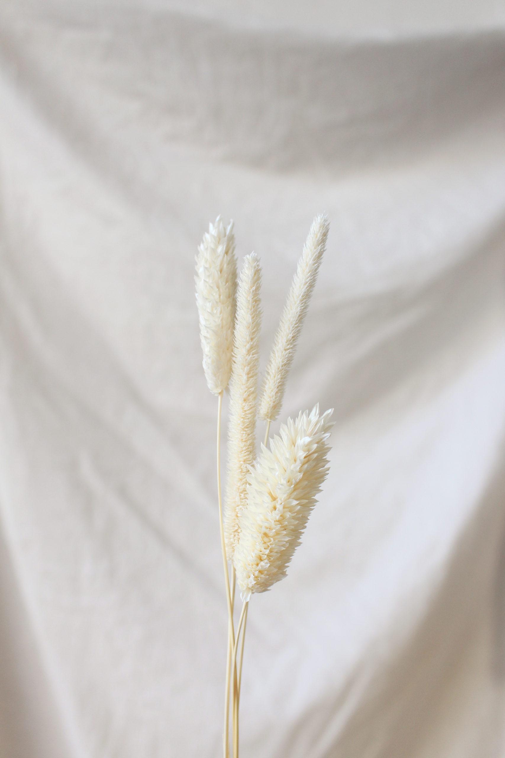 Moodbild mit Trockenpflanzen